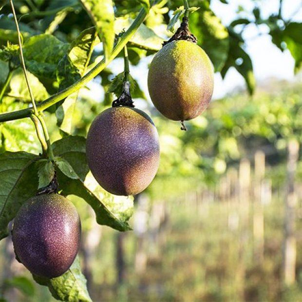 Enjoy passionfruit