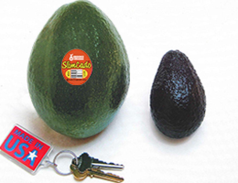 It's a big avocado