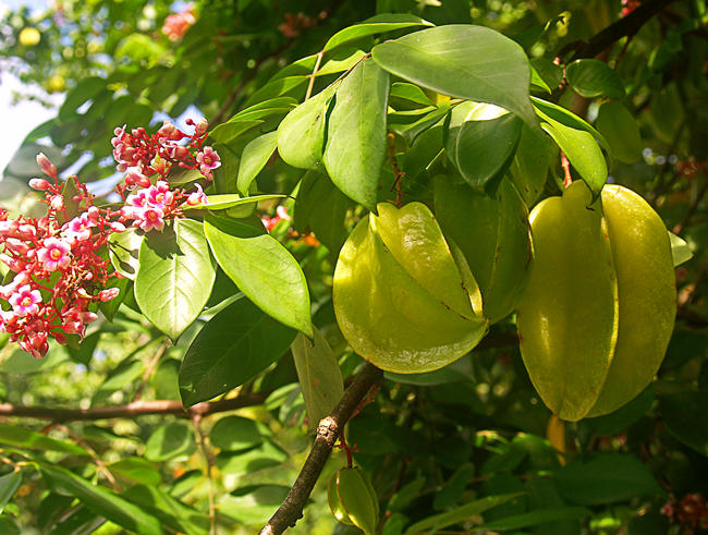 starfruit and flower