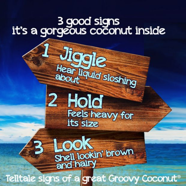 3 good signs of a great coconut