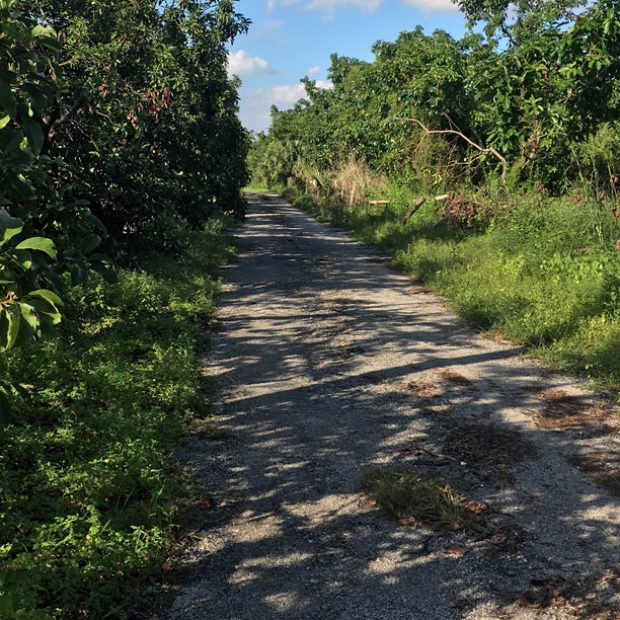 Down an avocado lane