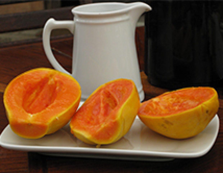 3 solo papaya boats at your beck and call