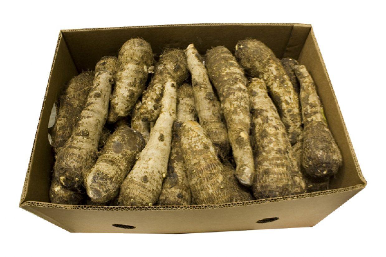 malanga blanca boxed