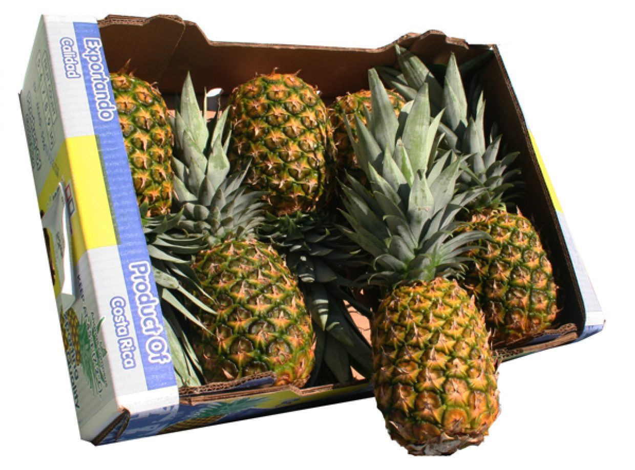 pineapple 7ct boxed