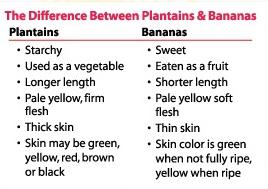 plantains vs banana