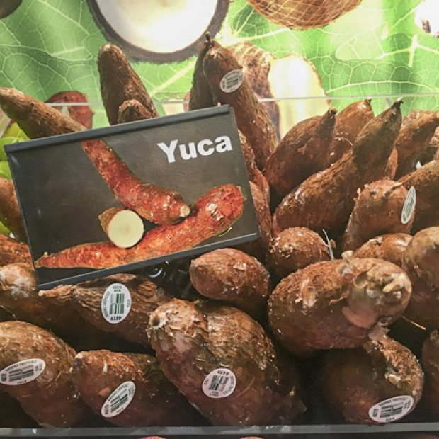 Yuca or cassava