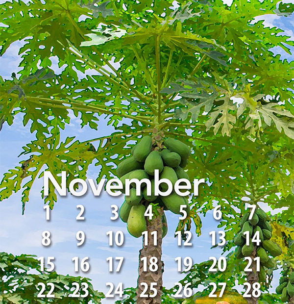 2020 Tropical Fruit calendar