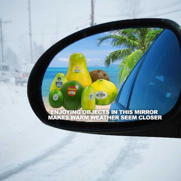 Tropical rearview mirror