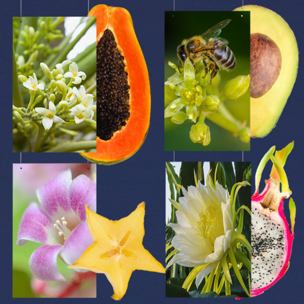The flowers of our fruits