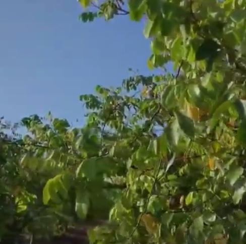 starfruitgrove.