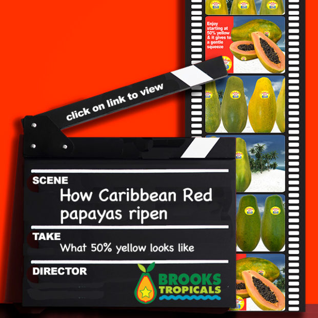 Watch how a Caribbean Red papaya ripens