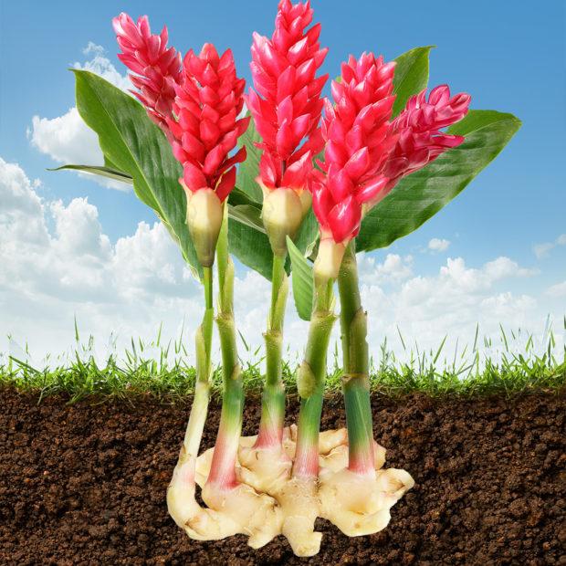Beauty is only soil-deep