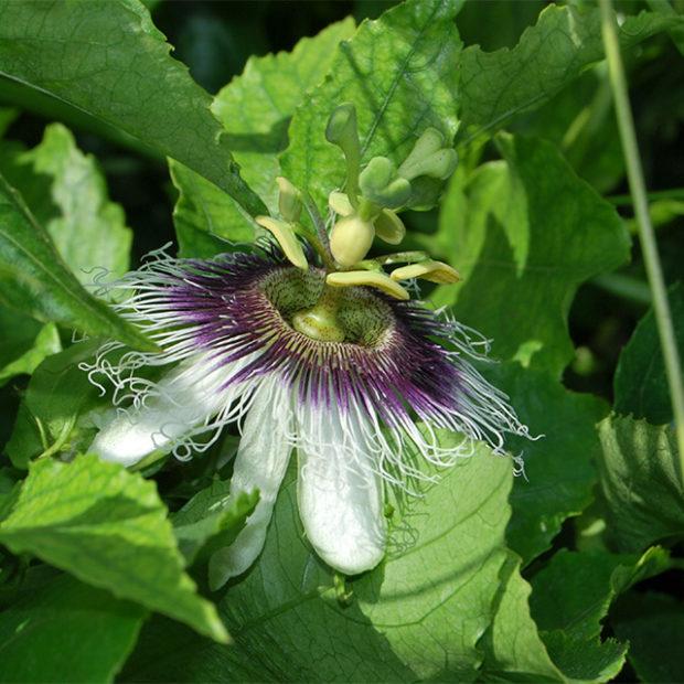 Eye catching flower