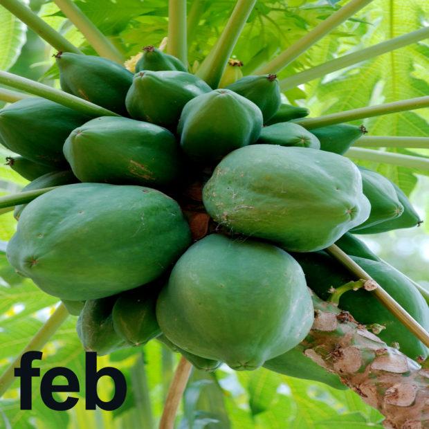 February's tropical fruit calendar