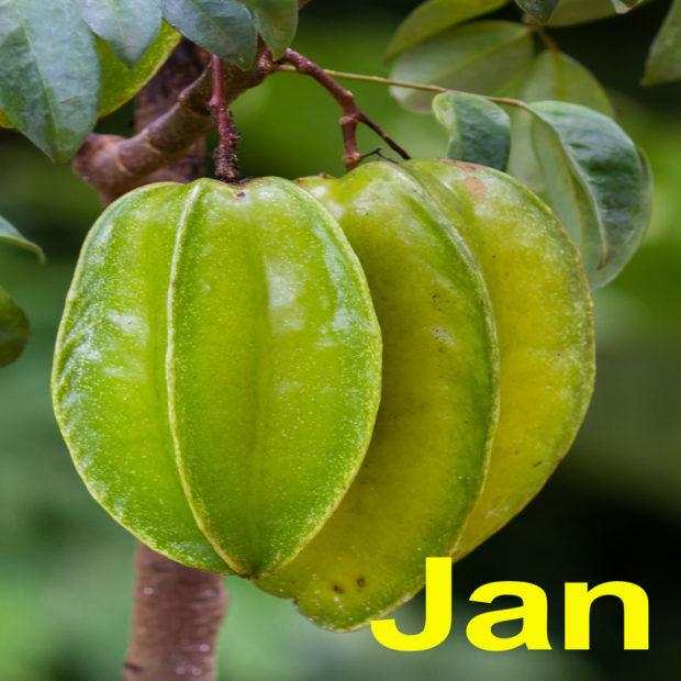 2021 tropical fruit calendar