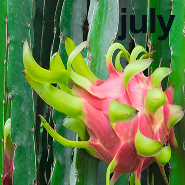 July is dragonfruit's month