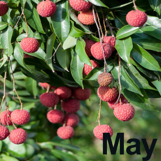 May is Lychees' month